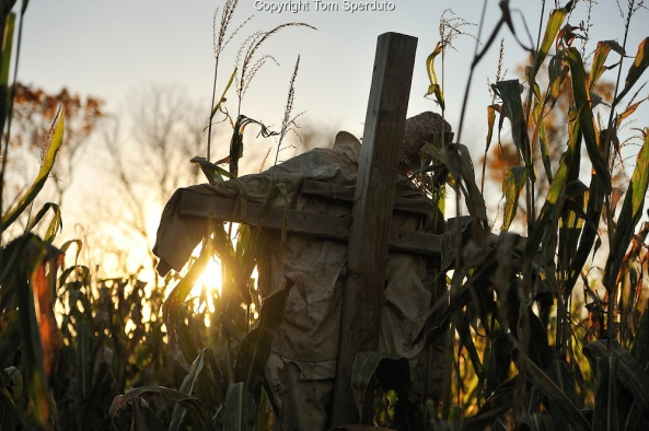 Arasapha Farms Haunted Corn Maze